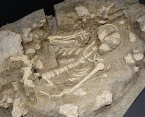 サキタリ洞遺跡出土人骨2