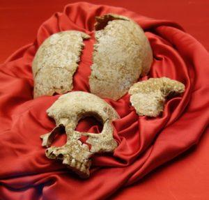 サキタリ洞遺跡出土人骨1